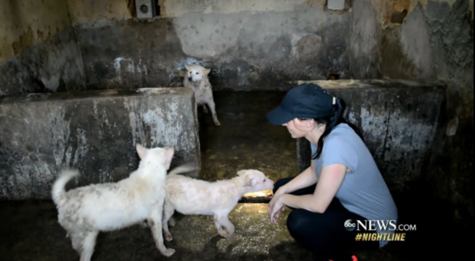 Julianne Perry at dog meat farm in China.